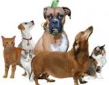 Kaip išsirinkti Jums tinkantį naminį gyvūną?