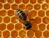 Kas nebijo bičių įgėlimų?