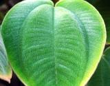Rugsėjo 29 d. - Pasaulinė širdies diena