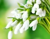 Atsargiai – pavasaris!