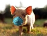Valdžia siūlo nesigąsdinti dėl kiaulių gripo