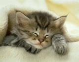 Kaip sėkmingai gydytis... katėmis?