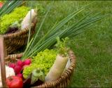 Ekologija - visos priežastys vartoti natūralią produkciją