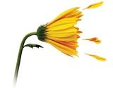 Alerginiu rinitu sergantys pacientai nusipelno geresnės gyvenimo kokybės