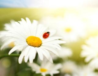 Specifinė imunoterapija – smūgis alergijai iš vidaus