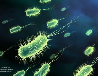Nuo rėmens – fermentai ir gerosios bakterijos