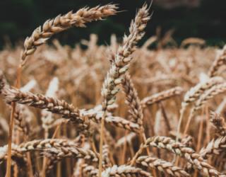 Kokie dažniausi maisto alergenai sukeliantys alergines reakcijas?