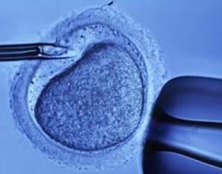 Ar įmanoma pasirinkti kūdikio lytį: ką sako mokslininkai?